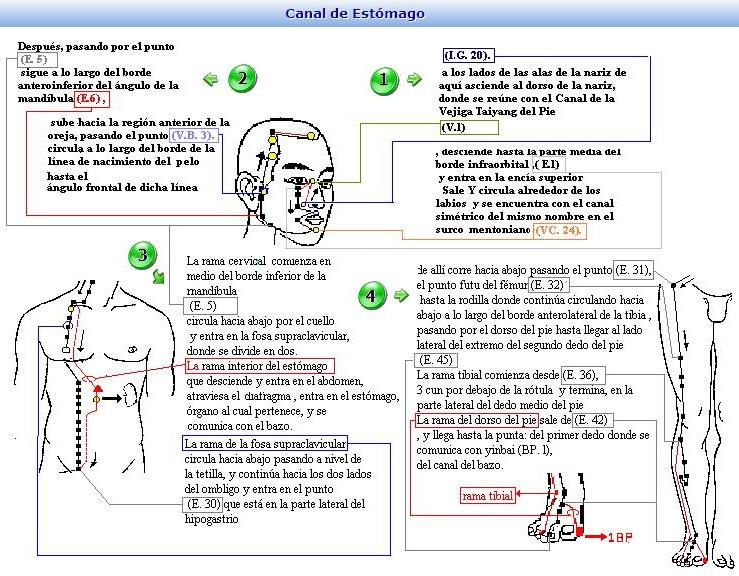 FISIOLOGIA DEL ESTOMAGO-BAZO PANCREAS